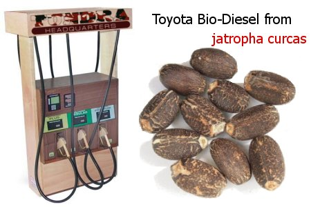 Toyota invests in bio-diesel made from jatropha curcas.